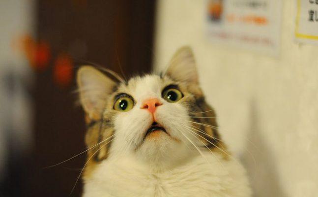shocking-cat